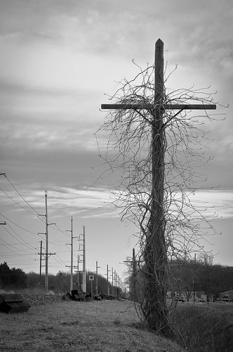 vines cross delaware telephonepole railroadtracks railroadtrack cheswold