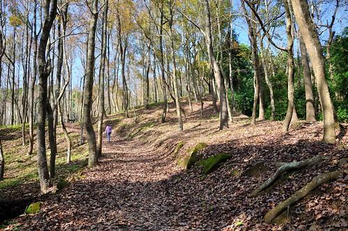 東勢林場森林浴場內的楓樹林,山徑已經完全被落葉所掩蓋