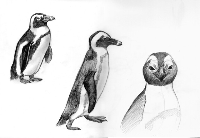 African Penguin Drawing African Penguins | Visual