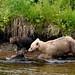 Bear 28