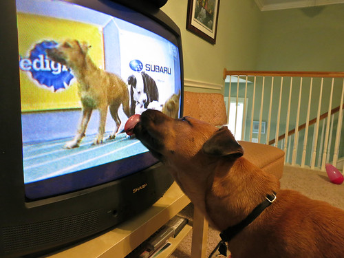 Everyone loves the Puppy Bowl!