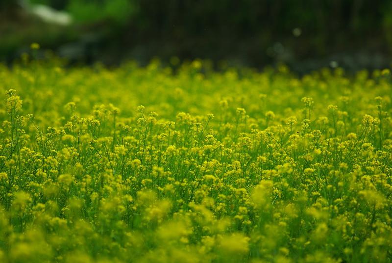 20120206山村花海