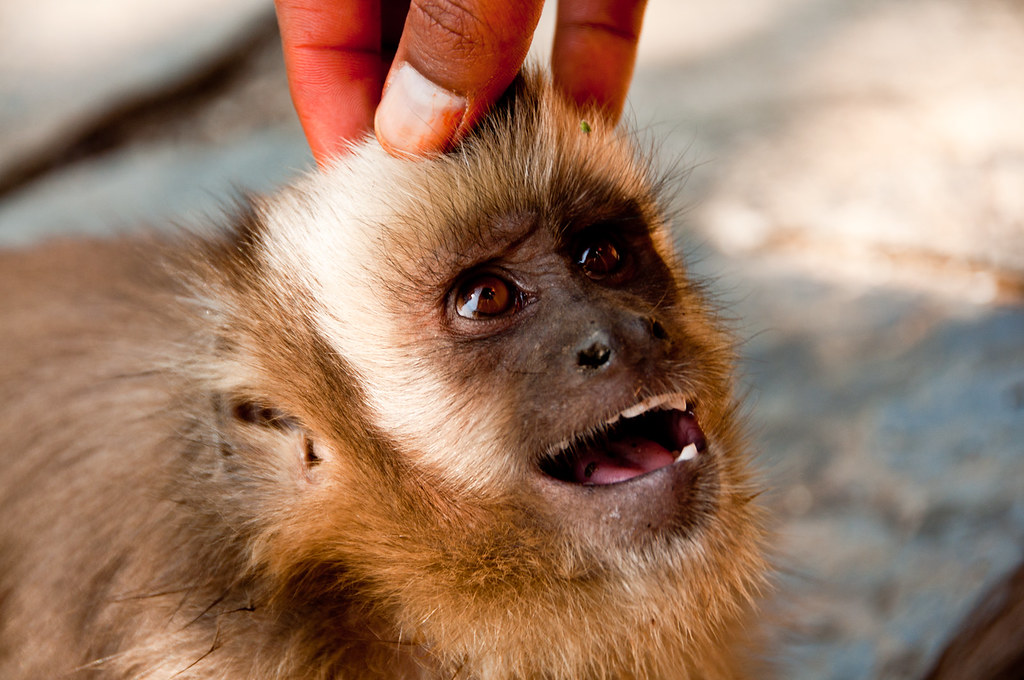 Jason.Kopp.15.CapuchinSmiles.Cusco,Peru.jpg