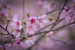 The Taste of Spring