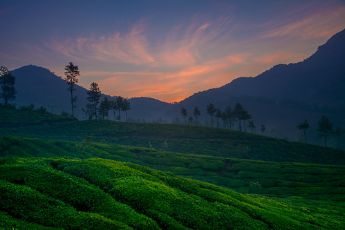 Before Sunrise - Munnar
