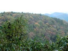 高尾山20111124-087