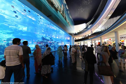 Aquarium, Dubai Mall (the largest acrylic panel in the world)