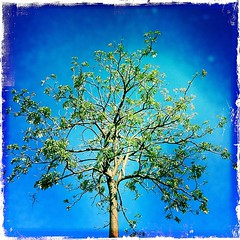 tree of life on a blue canvas