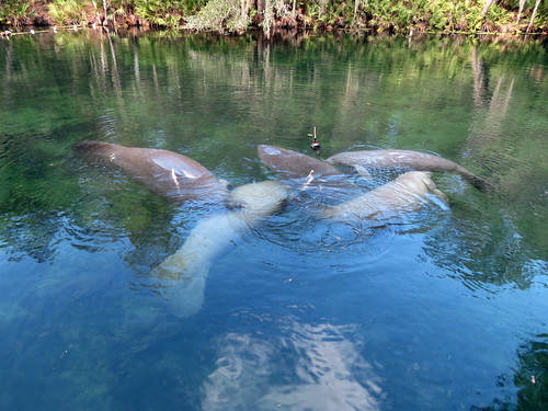 Manatee Party
