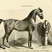 La connaissance générale du cheval. atlas.