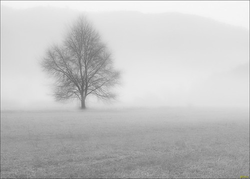 tree in the fog
