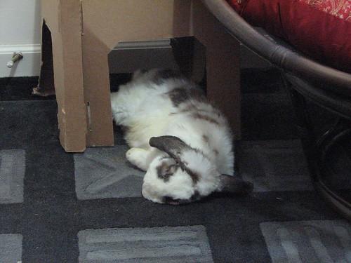 betsy napping