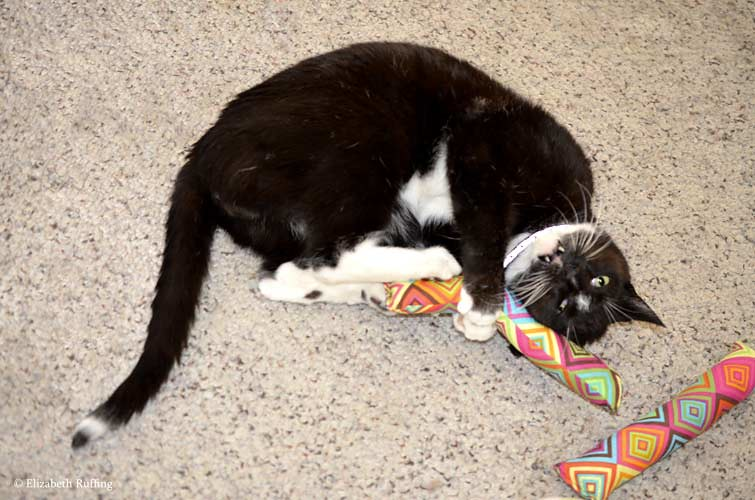Tuxedo cat playing with catnip toys, Elizabeth Ruffing