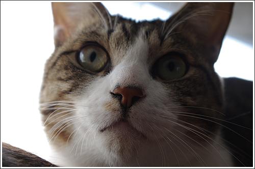 今日の猫(2011-12-05)