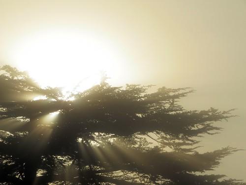 fog sunrise canon alba nebbia sx40hs canonpowershotsx40hs