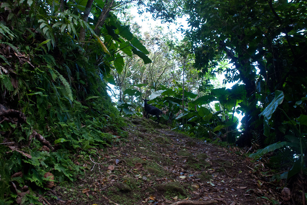 Saba rainforest