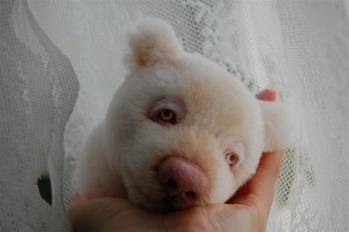Albinos (1)