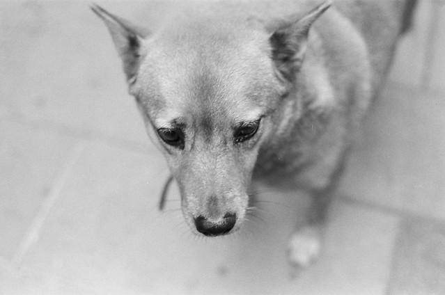 安平芋粿店前的狗狗