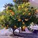 Post image for 8 savjeta za napravit dobru marmeladu od mandarina