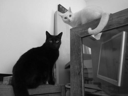 Gaspar et Myuki