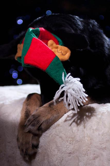 Mitzi's Christmas Cheer