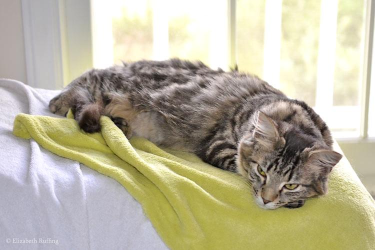 Bertie lounging in window, photo by Elizabeth Ruffing