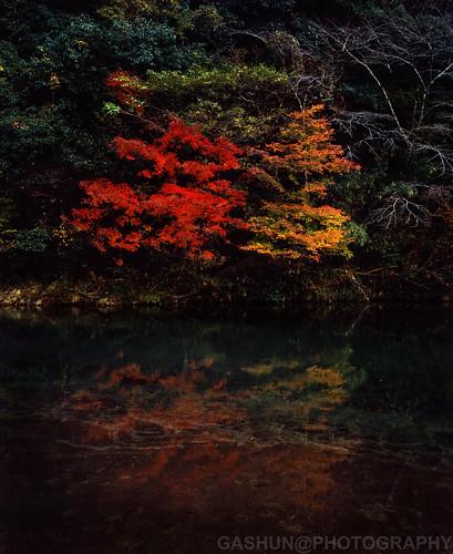 Aichi -autumn scene- 'DUSK'