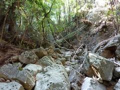 Fin de remontée du Velacu : le lit du ruisseau bien encombré
