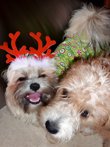 Merry Christmas from Scout and Henry!