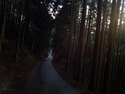 目眩の北山杉林路 by Nakai Nakaya