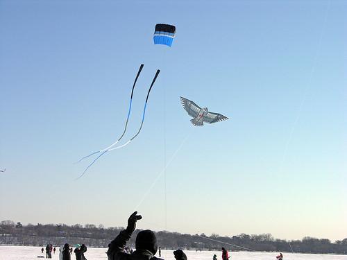 bird and big tail kites