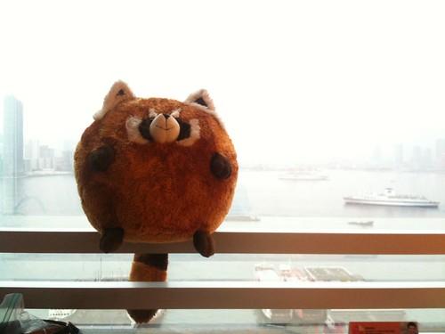 Xiang Tau, our Ocean Park Red Panda Souvenir Doll