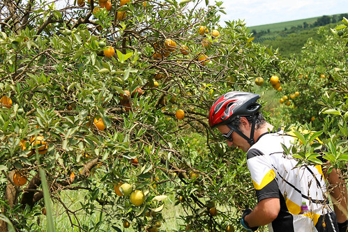 Roubando laranja do pomar :-) / Getting some oranges on the other side of the fence ;-)