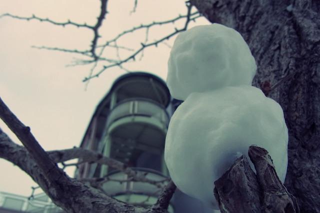 木の上に小さな冬