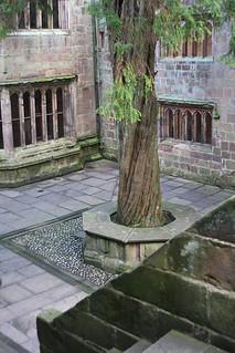 skipton castle courtyard yew tree