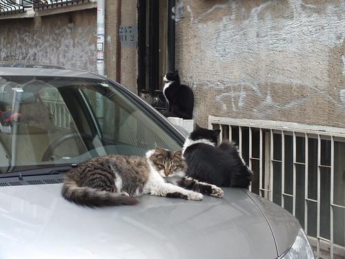 Vigyázunk a kocsidra, tesó!