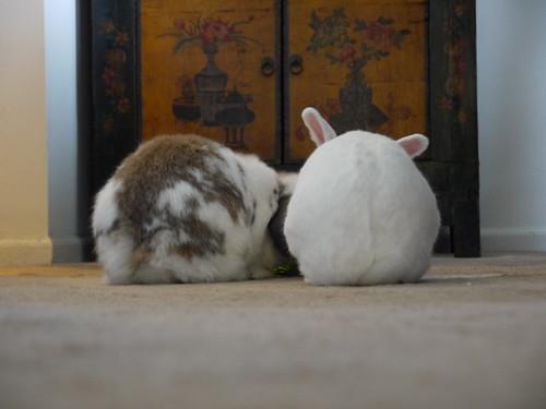 bunny behinds