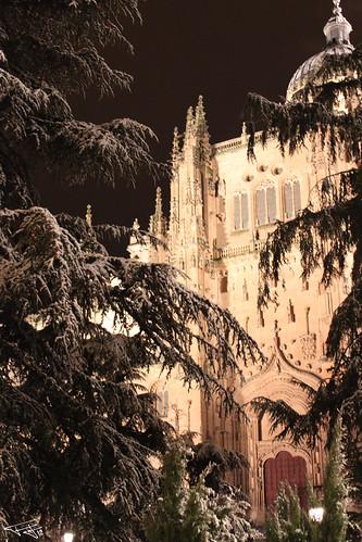 Arboles nevados catedral no
