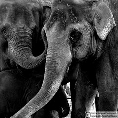 Day at the zoo 3 | Elephant love