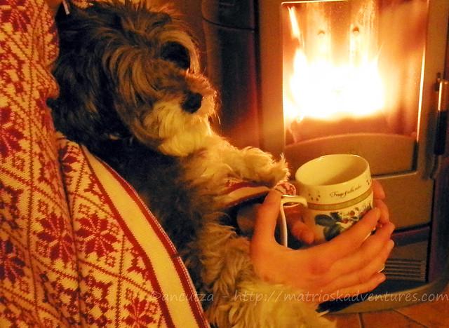 immagine foto cane simpatico e buffo davanti al caminetto
