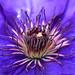 Purple flower by Marcello Bardi