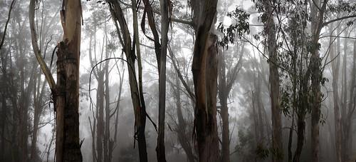 無料写真素材, 自然風景, 森林, 樹木, 霧・霞