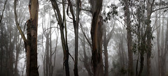 [Free Images] Nature, Forest, Trees, Fog / Mist ID:201201211200