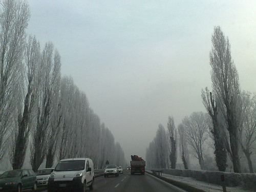 Tra gli alberi gelati by durishti