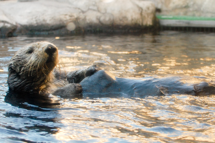 @ Monterey Bay Aquarium