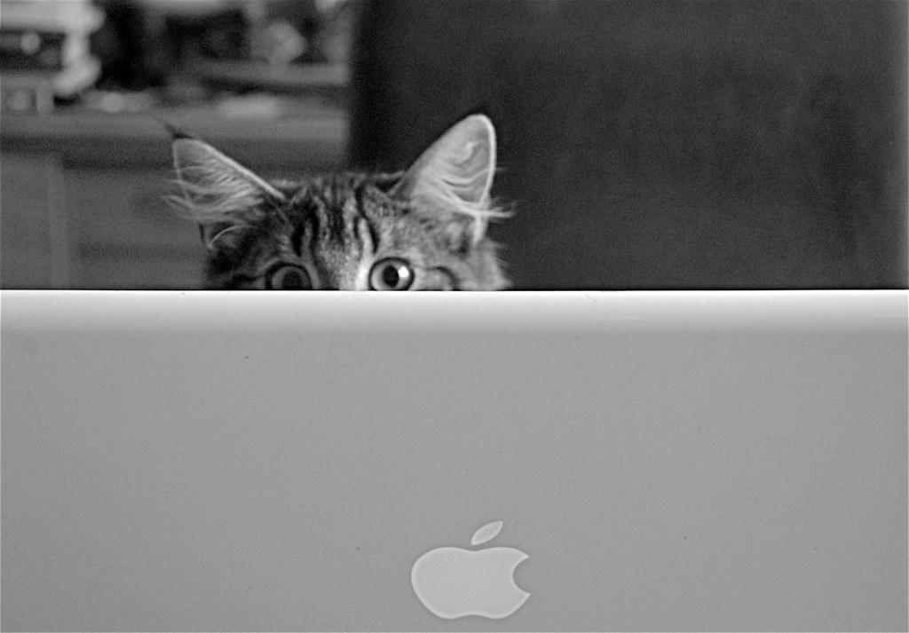 twitter cat