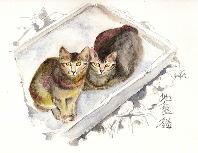 Stray Cats Keeping Warm 地盤貓取暖