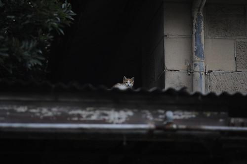 Callan Park Cat House