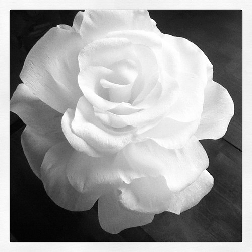 #photoaday I made this giant rose out of crepe paper.