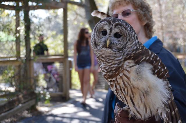 Lowry Park Zoo 1-29-12 004